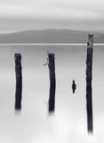 Wooden posts in lake. Aged and weathered timber posts standing in the waters of Loch Ness, Scotland Royalty Free Stock Photo