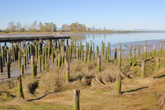 Remnant of Canadian West Coast Fishing Industry. Wooden posts that once supported docks for the fishing industry are slowly disappearing on Canada`s west coast Stock Photos