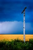 Wooden power line. In a field Royalty Free Stock Image
