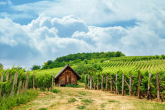 Wooden press house in vineyard. Wooden press house in old vineyard, summertime Royalty Free Stock Photos