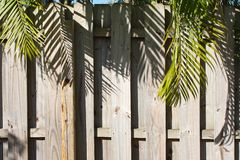 Wooden Privacy Fence with Palm Trees Overhanging Royalty Free Stock Image