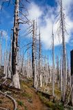 Wooden public Toilet/restrooms in a national park, in Oregon. Field of burned dead conifer trees with hollow branches in beautiful old forest after devastating stock photography
