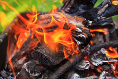 Wooden pyre in nature. Wood fire burning on the background of green grass Stock Photos