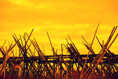 Wooden rack for air-drying fish. Against the golden sunset sky. Fishing village, Lofoten Islands, Norway Royalty Free Stock Photo