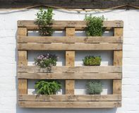 Mediterranean style wooden rack with fresh herbs on white, Netherlands Royalty Free Stock Image
