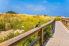 On the wooden railing sits a crow Stock Photos