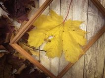 Wooden rectangular picture frame and yellow autumn leaves, maple on the background of wooden boards. The background. Texture stock photos
