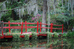 Wooden red bridge surrounded by spring flowers at the Magnolia Plantation and Gardens in South Carolina. Royalty Free Stock Images