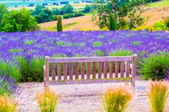 A wooden bench and Lavender fields in England, UK. A wooden retro bench and Lavender fields in England, UK Stock Images