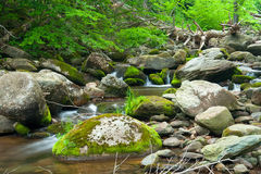 Wooden river Stock Image