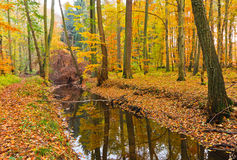 Wooden river. In autumn forest Stock Photos