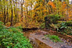Wooden river in autumn forest Stock Photography