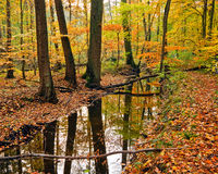 Wooden river in autumn forest Stock Photo