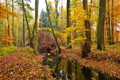 Wooden river in autumn forest Stock Image