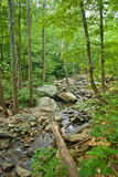 Wooden river in Shenandoah national park Royalty Free Stock Images