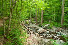 Wooden river in Shenandoah national park Stock Image