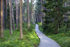 Wooden road (pass) in the forest Royalty Free Stock Images