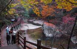 Wooden road and pond in golden autumn. In the autumn, a wooden road across in golden fall forest with a pond and some people in it. Which was in Guangwu(light Stock Images