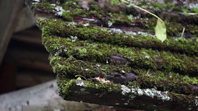 Wooden roof covered in moss Royalty Free Stock Photo