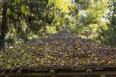 Wooden roof covered with leaves royalty free stock photo