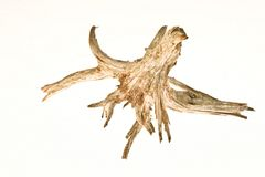 Wooden root Royalty Free Stock Photo