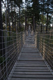 Wooden rope bridge. In the forest Royalty Free Stock Images
