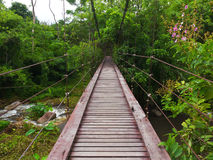 Wooden rope walkway in a rainforest Royalty Free Stock Photos