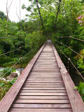Wooden rope walkway through in rainforest Stock Images