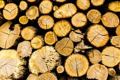 Wooden rough textured background. Pine chopped firewood stacked in woodpile royalty free stock image