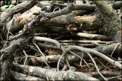 Wooden ruin trunk. Outdoor wooden ruin trunk wallpaper Royalty Free Stock Photo