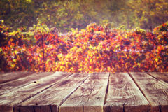 Wooden rustic boards in front of vineyard background in autumn. ready for product display. Stock Image