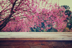 Wooden rustic table in front of Spring Cherry blossoms tree. retro filtered image. product display and picnic concept Stock Photos