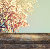 Wooden rustic table in front of spring white cherry blossoms tree. vintage filtered image. product display and picnic concept Royalty Free Stock Photo