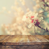 Wooden rustic table in front of spring white cherry blossoms tree. vintage filtered image. product display and picnic concept Stock Photography
