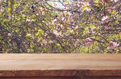 Free Wooden Rustic Table In Front Of Spring Cherry Blossoms Tree. Product Display And Picnic Concept. Royalty Free Stock Photo - 111125135