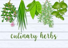 Wooden Scandinavian background of hanging farm fresh culinary hanging herbs. Greenery basil, rosemary, chives, thyme, Stock Photo