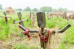 Wooden scarecrows standing on the field in village stock images