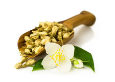 Wooden scoop with dry jasmine Stock Photography