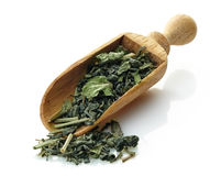 Wooden scoop with green tea and mint royalty free stock photography