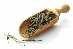 Wooden scoop with green tea Pai Mu Tan Stock Photos
