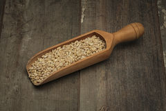 Wooden scoop with pearl barley Royalty Free Stock Photography