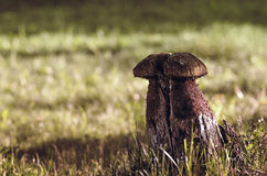 Wooden sculpture of mushroom. In the green grass of summer forest Stock Photography