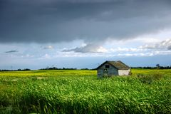 Wooden Shed in Canola Field Royalty Free Stock Photos