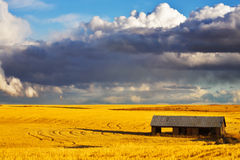Wooden shed in field after harvesting Stock Images