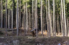 Wooden shed in the forest Royalty Free Stock Photography