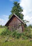 Wooden shed overgrown with blackberries Stock Images