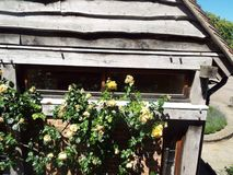 Wooden shed with Roses Royalty Free Stock Photos
