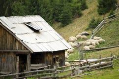 Wooden sheepfold in Carpathian mountains Royalty Free Stock Photos