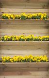 Wooden shelf with primroses. Flowers Royalty Free Stock Photo