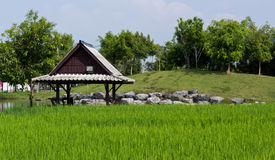 Wooden Shelter and Rice Field. Wooden Shelter was built in the back of rice field Stock Photography